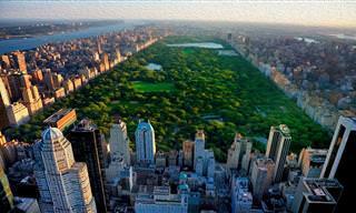 Recorre Con Nosotros La Ciudad De Nueva York