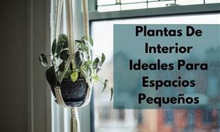 10 Plantas De Interior Perfectas Para Habitaciones y Espacios Pequeños