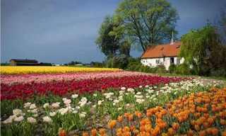 La Hermosa y Colorida Ruta De Las Flores