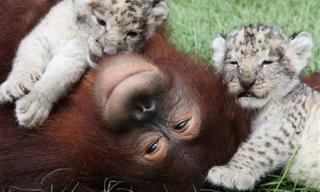 19 Conmovedoras y Bellas Historias De Amor Animal