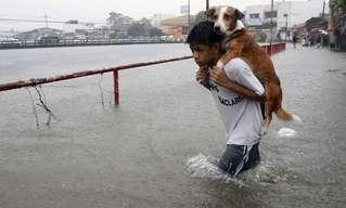 Cuando Los Humanos Salvan a Los Animales…