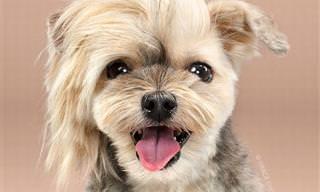 Antes y  Después: 8 Lindos Cortes De Pelo Caninos