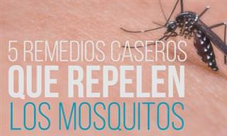 5 Remedios Caseros Para Mantener Los Mosquitos a Raya