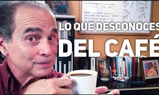 Descubre Factores Sobre El Café Que Deberías Conocer