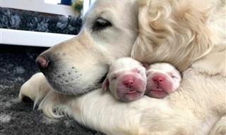 Tiernas Imágenes De Orgullosas Mamás Con Sus Lindos Cachorros