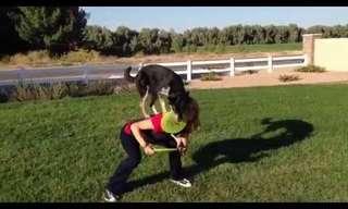 Los Campeones Caninos De Frisbee