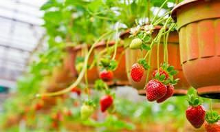 No Necesitas Jardín Para Cultivar Estas Plantas