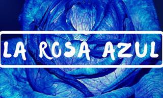 El Día Que Encontré Una Hermosa 'Rosa Azul'