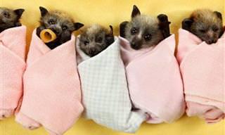¿No Son Estos Los 15 Animales Más Dulces?