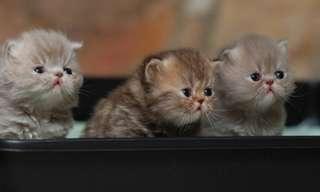 ¡Adorables y Tiernos Gatitos!