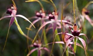 Las Orquídeas Son Flores Fascinantes...