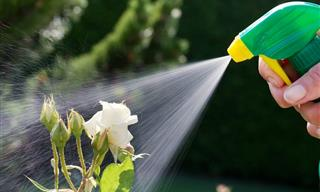Elimina Las Plagas Con Estos Pesticidas Orgánicos