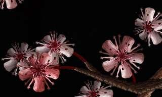 Las Asombrosas Flores Humanas...