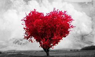 El ABC Del Amor…