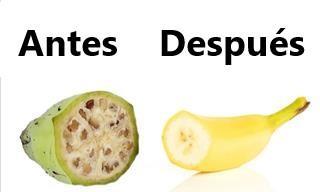El Cultivo Humano Cambió a Estas 8 Frutas y Verduras Por Completo