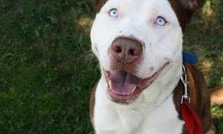 22 Cruzas de Perros Que Derretirán tu Corazón