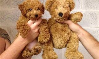 Los 17 Cachorritos Más Lindos y Adorables De Todo-Mail