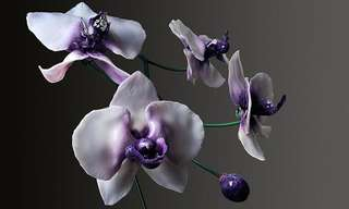 Las Flores Gigantes De Jason Gamrath