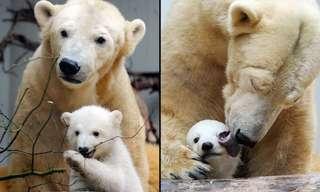 Las Súper Madres Del Reino Animal
