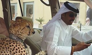 Imágenes Que Solo Verás Si Viajas a Dubai