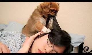 ¡El Despertador Canino Es La Mejor Forma De Levantarse!
