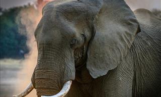 Cómo Los Elefantes Pueden Ayudar a Combatir El Cáncer