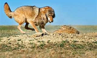 Increíbles Actos De Cooperación Animal