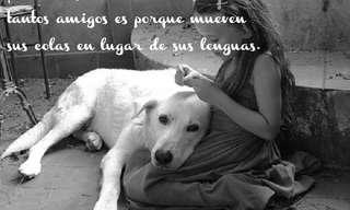 Un Adorable Homenaje a Nuestros Perros…