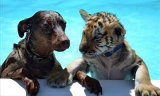 Los Perros y Los Gatos Tienen Diferentes Formas De Educar