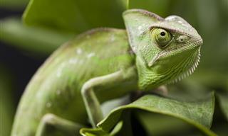 7 Tecnologías Inspiradas En Animales