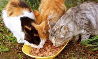 6 Formas De Mantener A Los Gatos Callejeros Lejos De Tu Propiedad