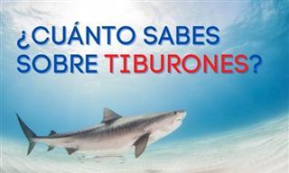¿Qué Sabes <b>De</b> <b>Los</b> Tiburones?