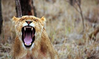 ¿Qué Animal Se Asemeja Mentalmente a Ti?