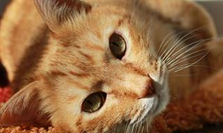 ¿<b>Te</b> Gustaría Demostrar Tus Conocimientos Sobre Los Gatos?
