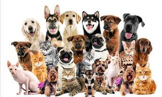 ¿Te Gustan Los <b>Perros</b>? Prueba Qué Tanto Sabes En Este Test