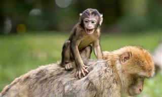 Test: ¿Juega Al Verdadero o Falso <b>Con</b> Estos Hechos De Animales?