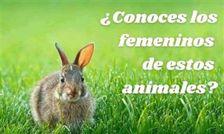 ¿Conoces El Vocabulario Del Mundo Animal?