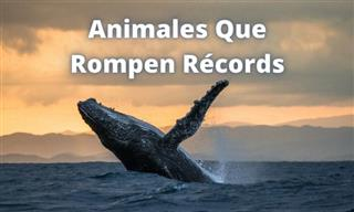 Animales <b>Que</b> Rompen Récords