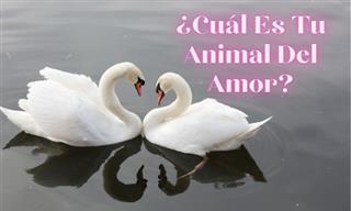 ¿Cuál Es Tu Animal Del Amor?