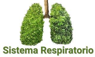 ¿Cuánto Sabes <b>Del</b> Sistema Respiratorio?