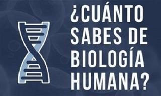 ¿Cuánto Sabes Sobre Biología Humana?
