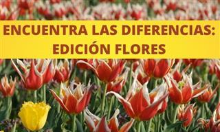 Encuentra Las <b>Diferencias</b>: Flores