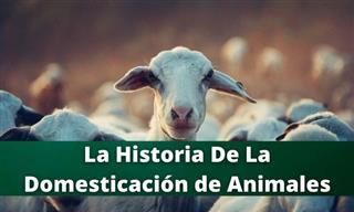 <b>La</b> Historia <b>De</b> <b>La</b> Domesticación Animal